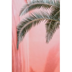 Affiche Palm on pink 30 x 40 cm