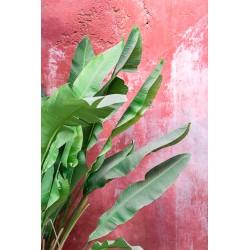 Affiche Bananiers sur Mer Rouge 30 x 40 cm