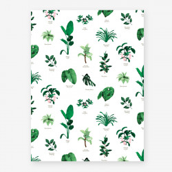 Affiche Botanic